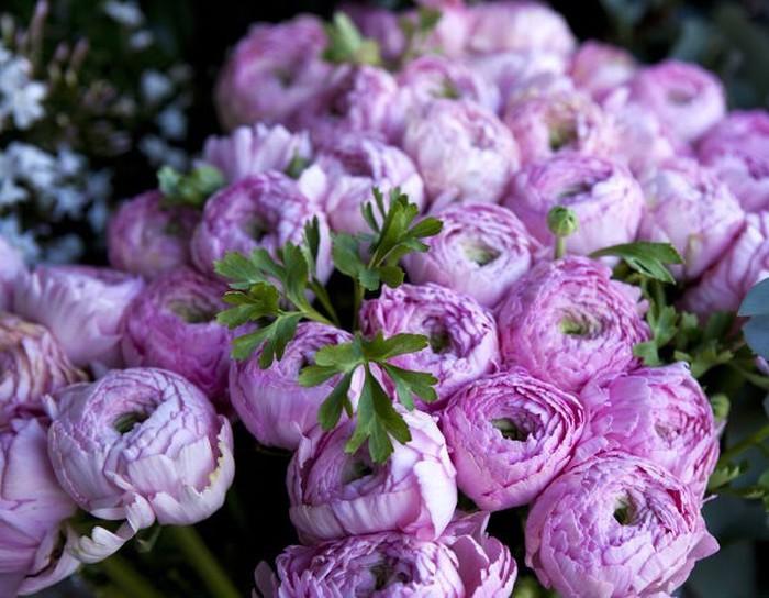 Hoa mẫu đơn tượng trưng sự tha thứ và lòng bao dung.